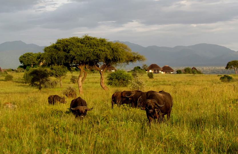 Uganda wildlife facts