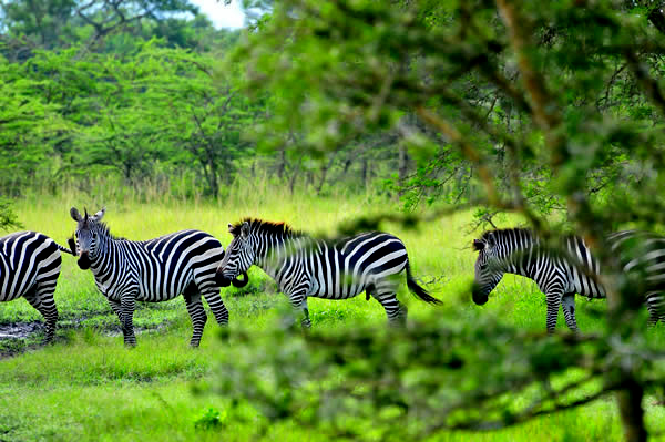 Uganda wildlife facts