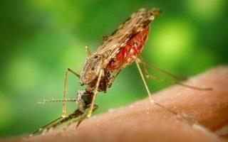 Malaria prophylaxis