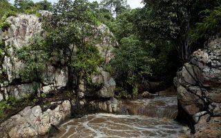 mabira_forest