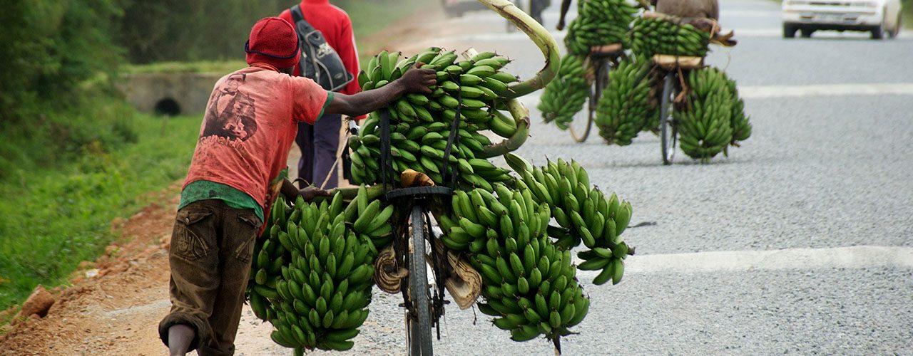 Uganda Matoke