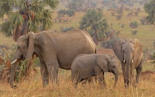 3 Days Uganda Wildlife Safari