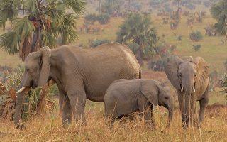 3 Days Uganda Wildlife Safari