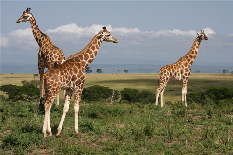 3 days kidepo safari