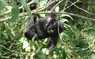 3 Days Mgahinga Gorilla Safari
