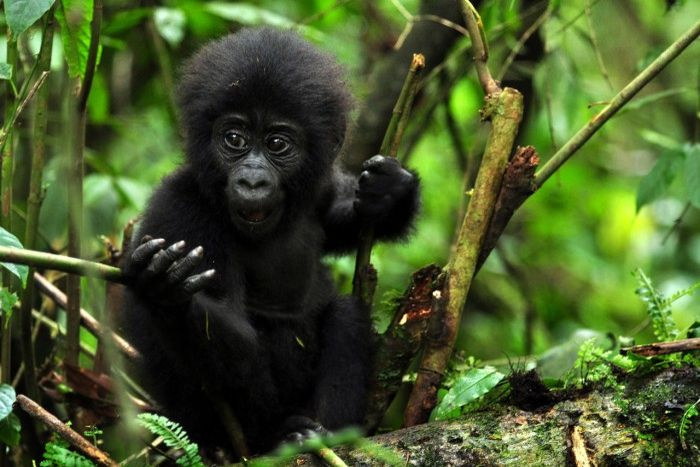 5 Days Uganda Primates Safari