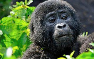 4 Days Flying Gorilla Safari - Chartered Gorilla Trekking in Bwindi