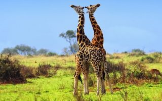 11 Days Classic Uganda Safari