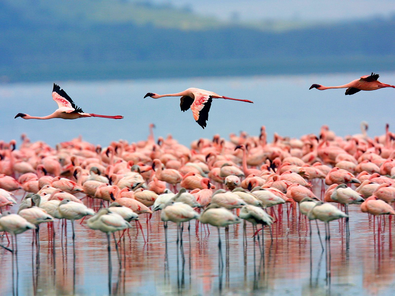 Image result for lake nakuru national park