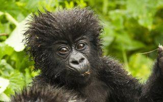 5 Days Rwanda Gorilla & Lake Kivu Tour
