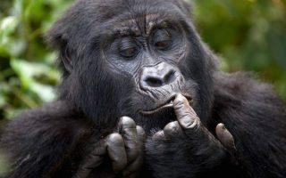 Full List of Rwanda Gorilla Families