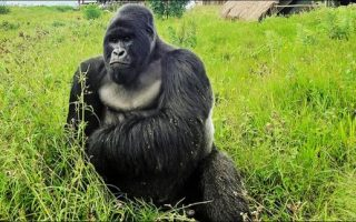 Rugendo Gorilla Group