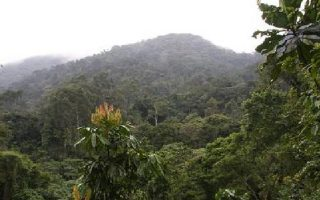 The 4 Sectors of Bwindi Impenetrable National Park