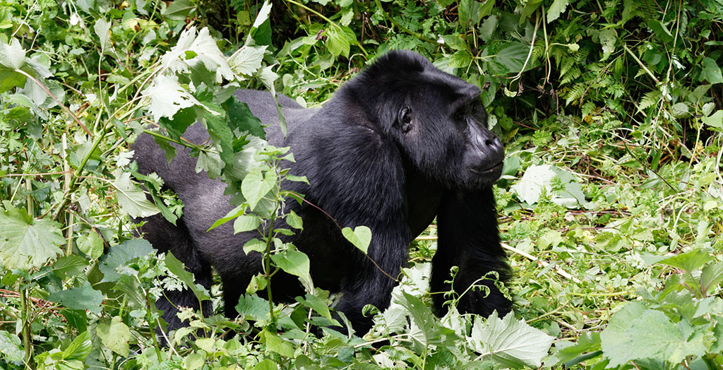 Why Visit Bwindi Impenetrable Forest